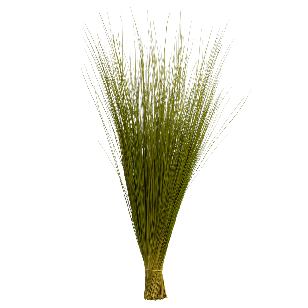 Photo of Grasses