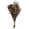 "Photograph of 12"" Autumn Banksia Foliage Flower 4oz"