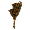 "Photograph of 12-16"" Autumn Brunia Stems - 4 oz Bundle"