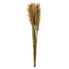 "Photograph of 36"" Ivory Plume Reed Bundle"