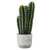 "Photograph of 17"" Green Cactus in Concrete Pot"