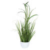 "Photograph of 32"" Green Potted Bamboo Grass"