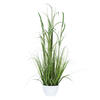 "Photograph of 41"" Green Potted Bamboo Grass"
