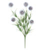"Photograph of 12"" Gray Lavender Pom Pom Bush 6/Pk"