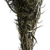"15-18"" Natural Green Phyliscens Bundle"