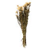 "Photograph of 12-14"" Natural Blush Straw Flowers -3oz."