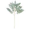 "Photograph of 17"" Green Dusty Miller Spray 3/Pk"